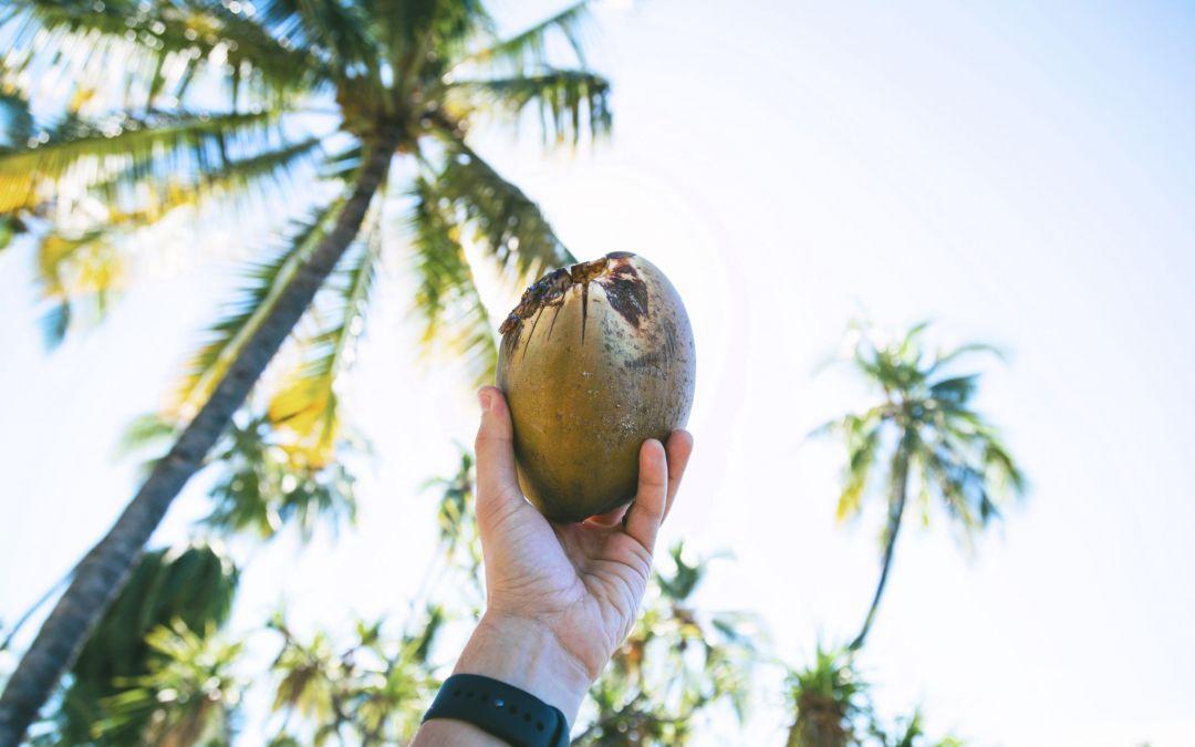 Wahres Wunder | Kokoswasser als Infusion